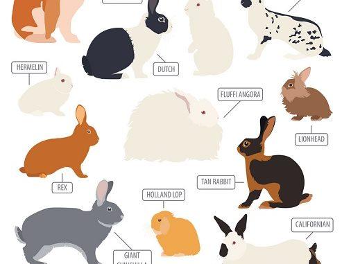 menghilangkan bau pesing kelinci