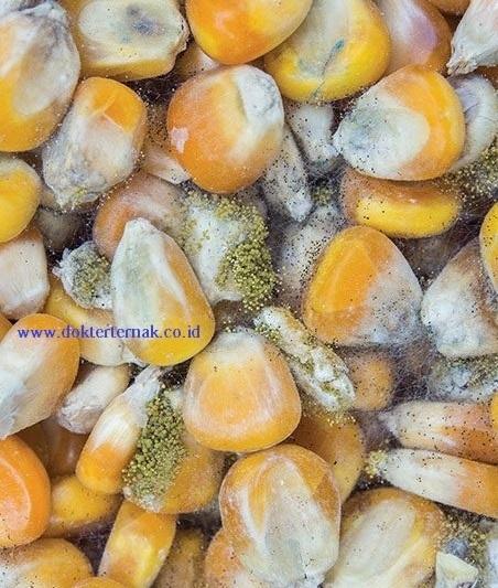 Jagung Jamuran